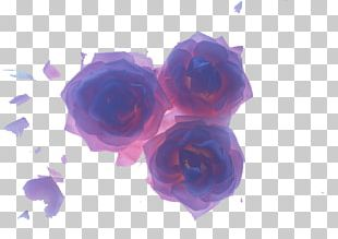 Beach Rose Blue Flower Petal PNG
