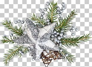 Fir Christmas Ornament Spruce Christmas Tree Twig PNG