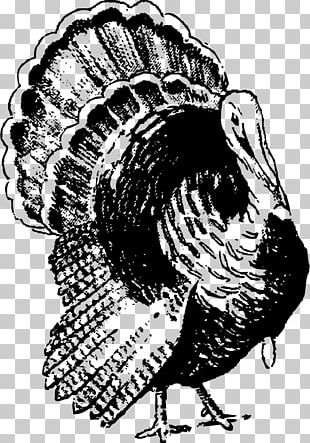 Black Turkey PNG