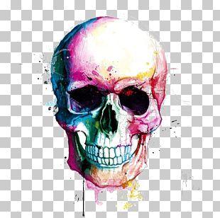 Skull Calavera Drawing Color Painting PNG