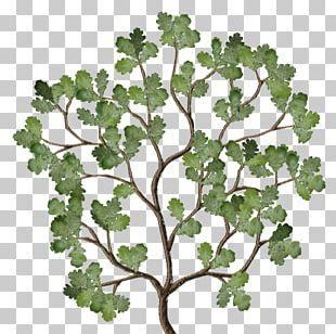 Twig Leaf Vegetable Plant Stem Family PNG