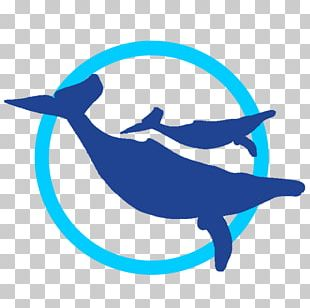 Whale Watch Cabo Dolphin Whale Watching Web Browser PNG