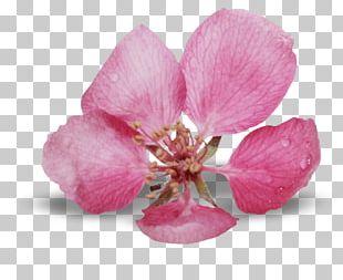 Flower Bouquet Petal Pressed Flower Craft Blue Rose PNG