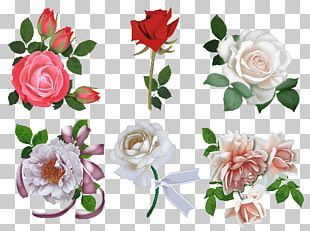 Garden Roses Beach Rose Cut Flowers Floral Design PNG