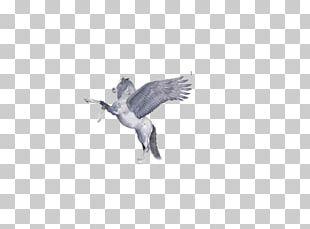 Duck Bird Beak Goose Cygnini PNG