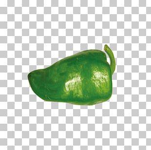 Pasilla Organic Food Bell Pepper Vegetable PNG