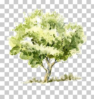 Drawing Watercolor Painting Tree Pencil Sketch PNG