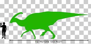 Lambeosaurus Parasaurolophus Dinosaur Size Tyrannosaurus Spinosaurus PNG