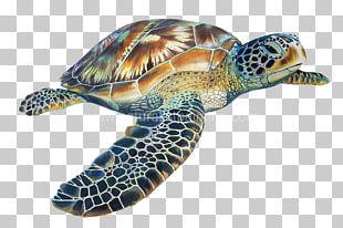 Loggerhead Sea Turtle Hawksbill Sea Turtle Tortoise PNG