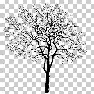 Tree Branch Trunk PNG