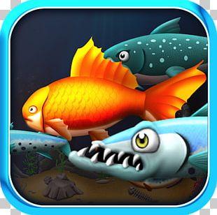 Coral Reef Fish Marine Biology Pomacentridae Organism PNG