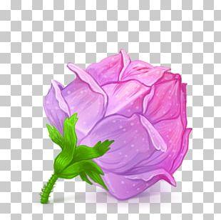 Pink Plant Flower Garden Roses Rose Family PNG
