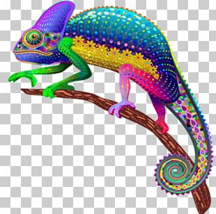 Panther Chameleon Lizard Veiled Chameleon Mimicry PNG