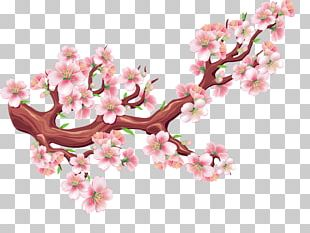 Bird Cherry Blossom Flower Tree PNG
