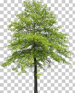 Tree Plant Shrub Nature Transpiration PNG