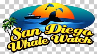 San Diego Whale Watch Whale Watching Cetacea Things To Do In San Diego PNG