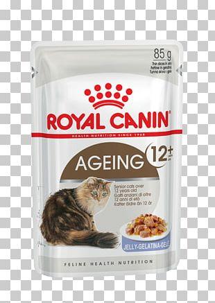Cat Food Kitten Dog British Shorthair Royal Canin PNG