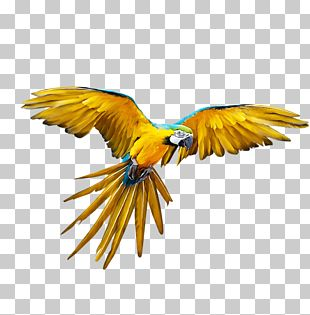 Parrot Bird Budgerigar Flight PNG