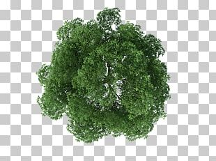 Tree Rendering PNG