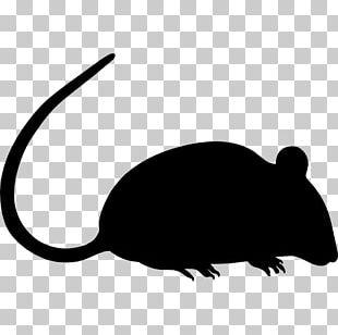 Mouse Rodent Laboratory Rat Pest Control BALB/c PNG