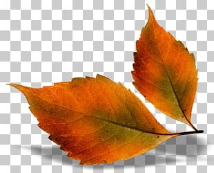 Autumn Leaf Color Autumn Leaves Chord Progression PNG