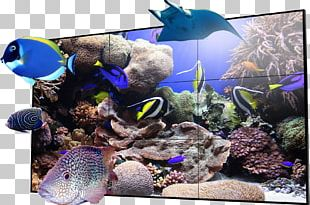 Coral Reef Fish Drawing Ecosystem PNG