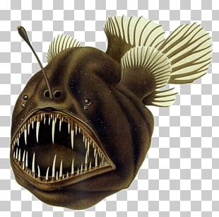 Black Seadevil Humpback Anglerfish Deep Sea Fish PNG