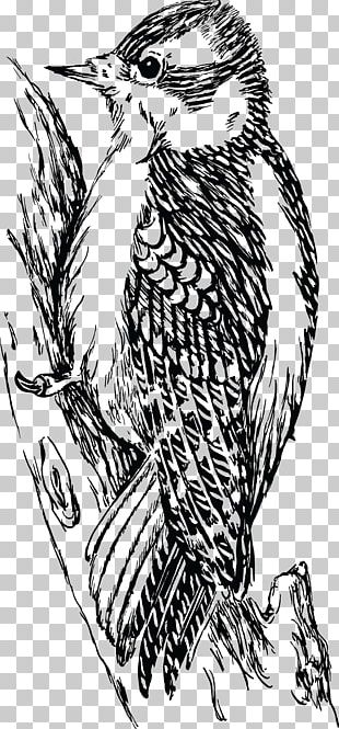 Downy Woodpecker Bird Bald Eagle Hawk PNG
