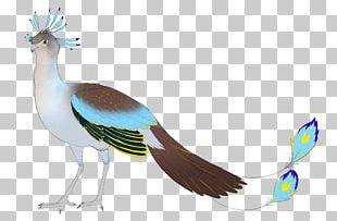 Bird Galliformes Beak Feather Wing PNG