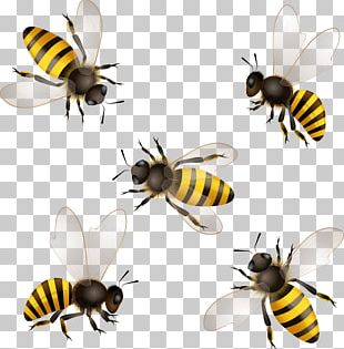 Honey Bee Insect Honeycomb PNG