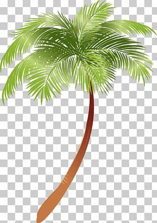 Arecaceae Asian Palmyra Palm Plant Coconut Milk PNG