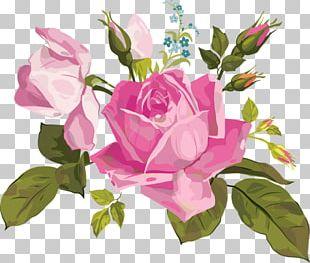 Garden Roses Centifolia Roses Floral Design Floribunda Flower PNG