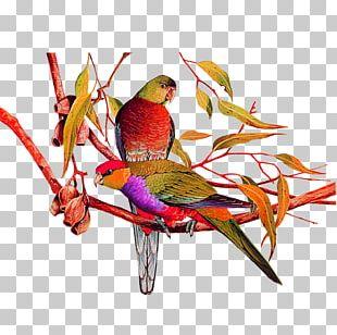 Bird Amazon Parrot Painting PNG