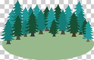 Spruce Fir Christmas Tree Christmas Ornament Pine PNG