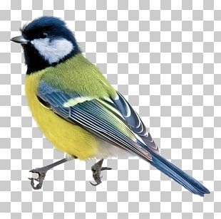 Bird Blue Watercolor Painting Drawing PNG