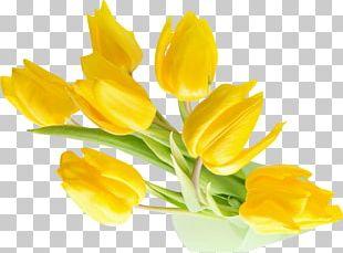 Indira Gandhi Memorial Tulip Garden Flower Yellow Desktop PNG