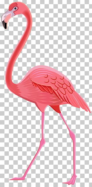 Flamingos Bird PNG