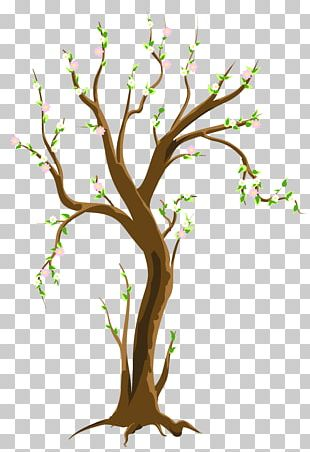 Tree Spring PNG