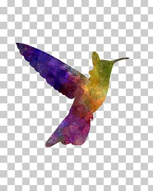 Hummingbird Watercolor Painting Art Oil Paint PNG