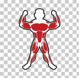 Skeletal Muscle Bodybuilding Adipose Tissue PNG