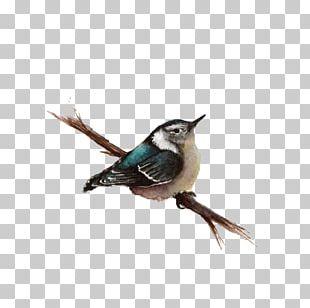 Bird Wren PNG