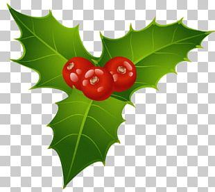 Mistletoe Christmas Common Holly Candy Cane PNG