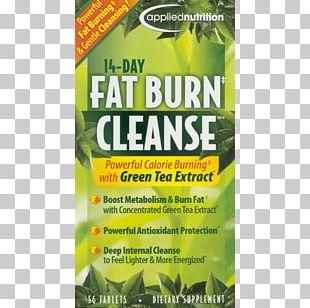 Detoxification Weight Loss Nutrition Fat Emulsification PNG