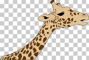 Northern Giraffe West African Giraffe PNG