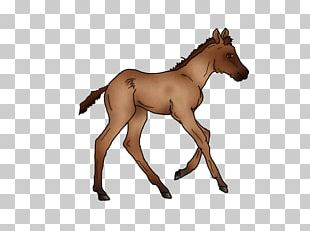 Mustang Foal Colt Stallion Mare PNG