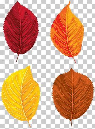 Santa Claus Autumn Leaf Color PNG