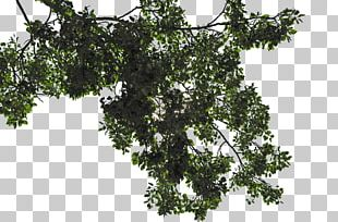 File Formats Tree PNG