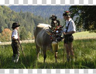 Almabtrieb AllgäuTop&LandHotels Tradition Party Horse PNG