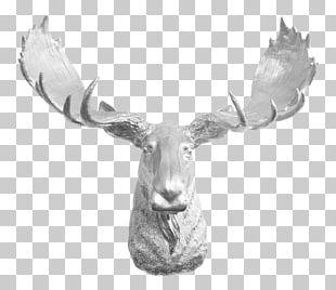 Moose Reindeer Antler Elk PNG