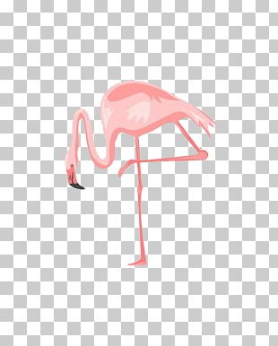 Poster Wall Flamingo PNG